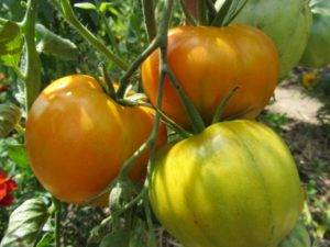 Описание томата оранжевое чудо