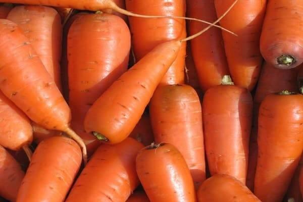 Выращивание моркови сортотипа шантане