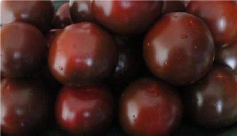 Характеристика и описание сорта томата Сахар коричневый, урожайность