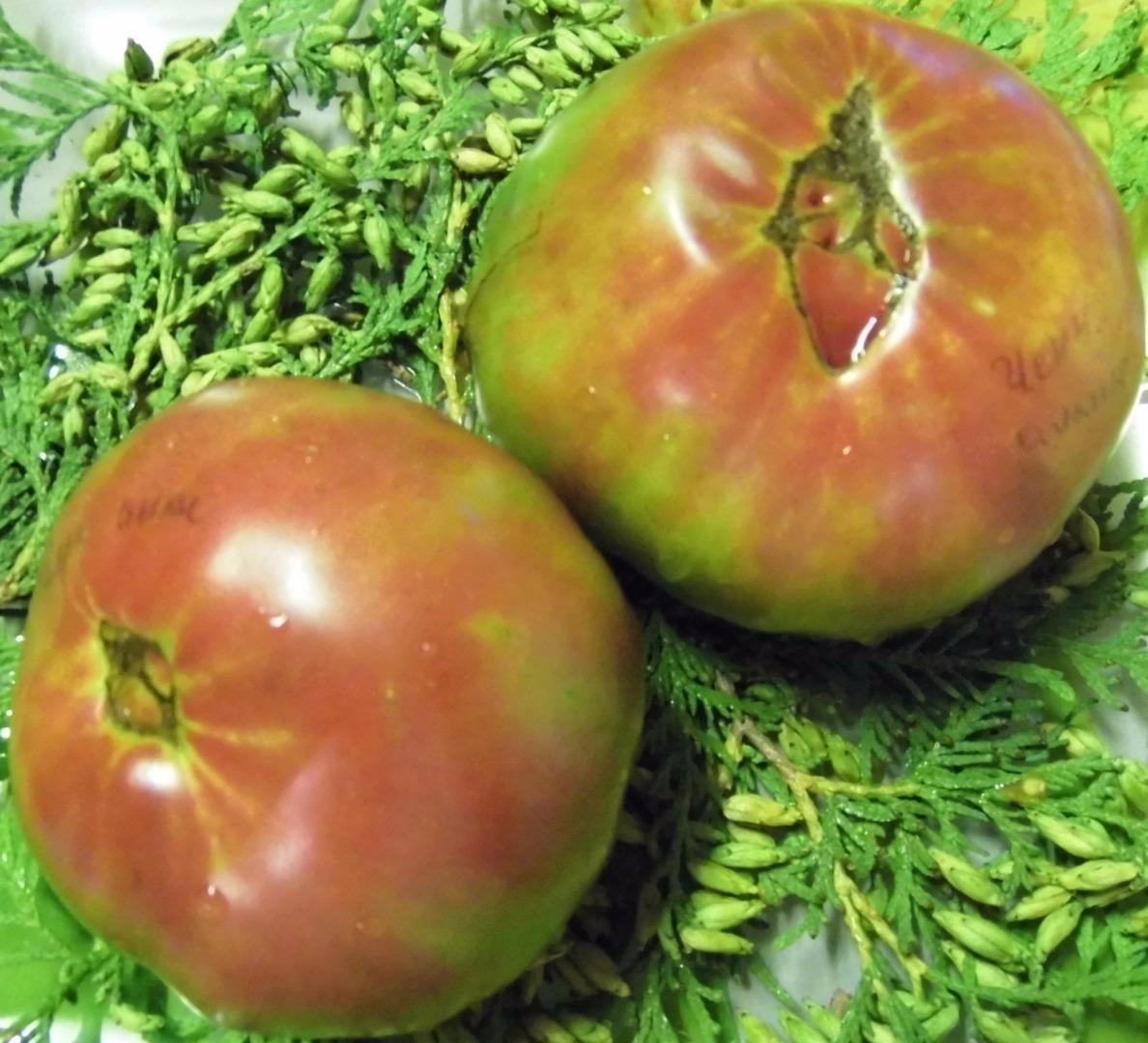Об экзотическом сорте томатов чёрный ананас