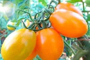 Характеристика и описание томата «большой белый бифштекс»