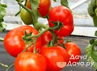 Томат сердце красавицы: описание и характеристика сорта, рекомендации по выращиванию с фото