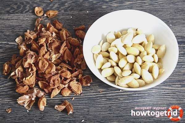 Заготовка миндаля впрок: чем обрабатывается орех и как создать лучшие условия для хранения?