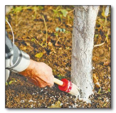Как лечить дупло у яблони. дупло в яблоне: правильно лечим рану и пломбируем опасное отверстие