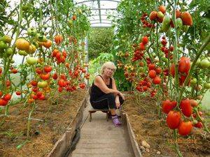 Особенности выращивания помидоров в парнике и описание подходящих сортов