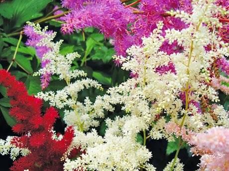 С какими цветами посадить лилии: 5 лучших идей с фото