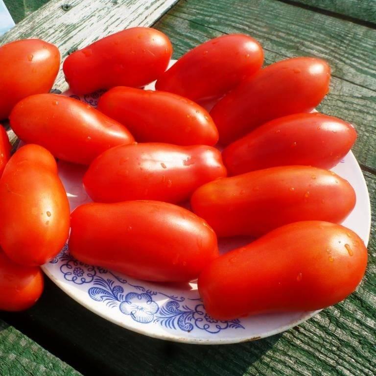 Сорта помидоров подходящие для консервирования и засолки