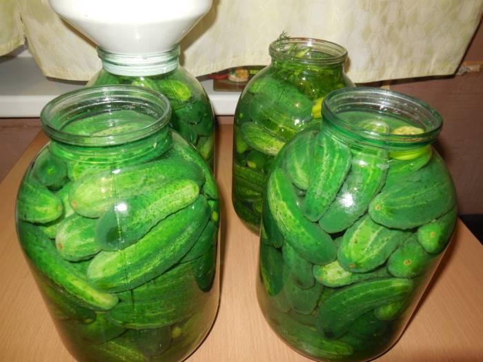 Засолка огурцов без сахара на зиму: 5 пошаговых рецептов с фото