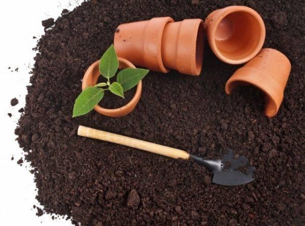 Простые и эффективные способы самостоятельной подготовки грунта для рассады томатов