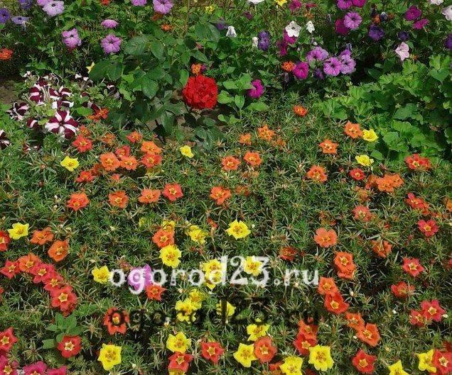 Однолетние цветы для дачи: виды и правила выбора