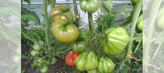 Перец: лучшие урожайные сорта