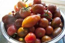 Лучшие томаты с желтыми плодами для консервации