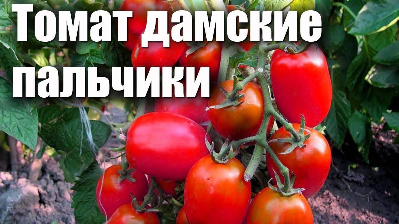 Характеристика и описание томата «римский полосатый»
