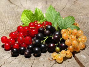 Полезные свойства и противопоказания белой смородины для здоровья человека