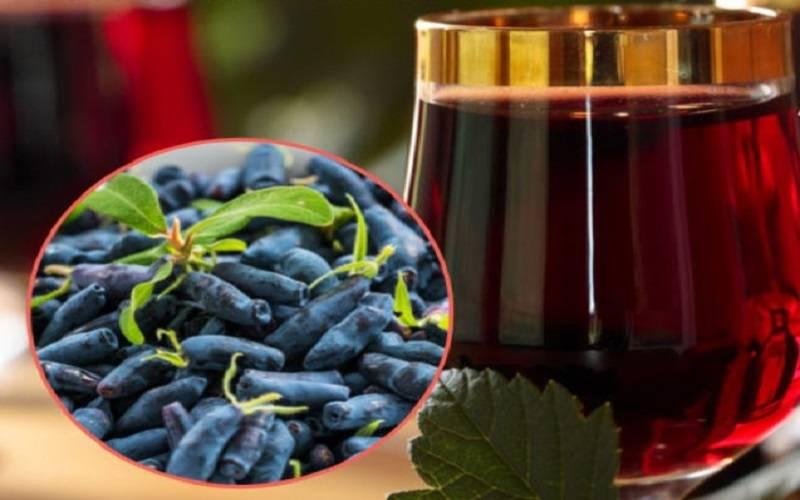 Пошаговый процесс приготовления вина из жимолости в домашних условиях