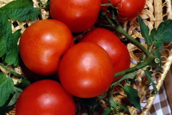 Лучшие сорта томатов для подмосковья для теплиц