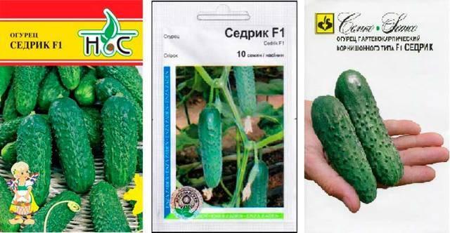 Характеристики и особенности выращивания огурцов сорта «седрик f1»