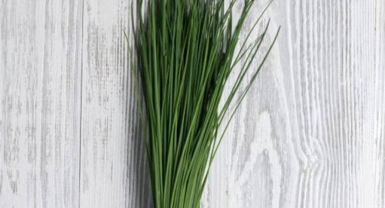 Шнитт-лук: описание, польза и лечебные рецепты