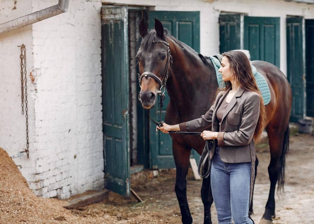 Грамотный уход за лошадьми: содержание, кормление и забота о здоровье