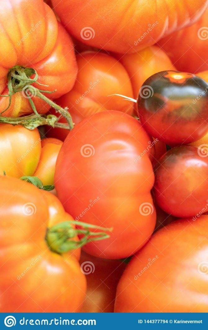 Некапризная и урожайная — описание и характеристики замечательного неприхотливого сорта томата «роза ветров»