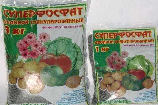 Подкормка огурцов в открытом грунте и теплице