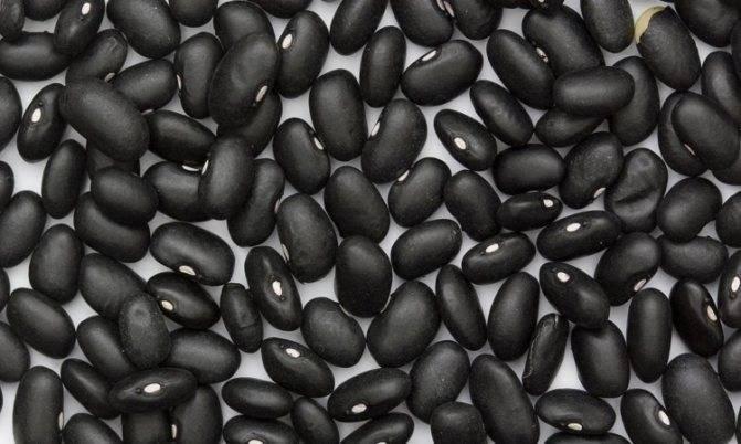 Описание сортов белой фасоли, полезные и вредные свойства, выращивание