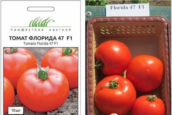 Продуктивный гибрид с отличными вкусовыми качествами — томат «флорида» и его преимущества