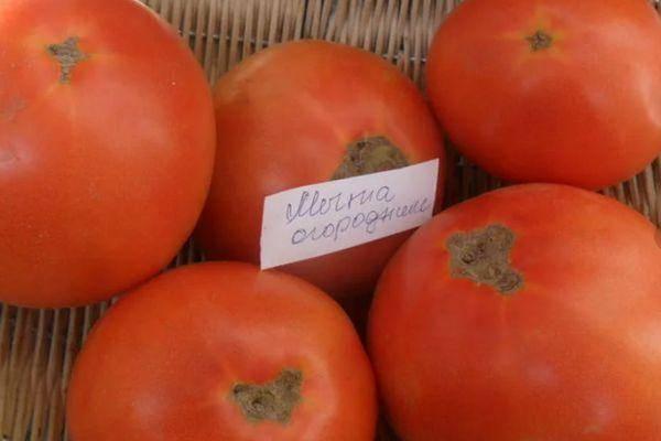 Получаем максимальный урожай при минимальных затратах сил — томат «чудо лентяя»