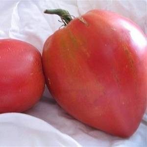 Низкорослый, раннеспелый гибрид высокоурожайных помидор «обские купола», описание и рекомендации по уходу
