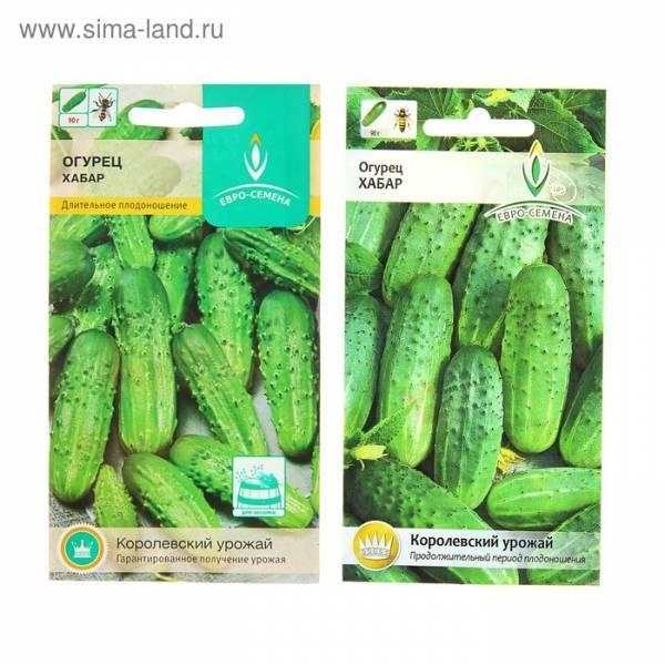 Сорт огурцов «хабар»: особенности выращивания и ухода