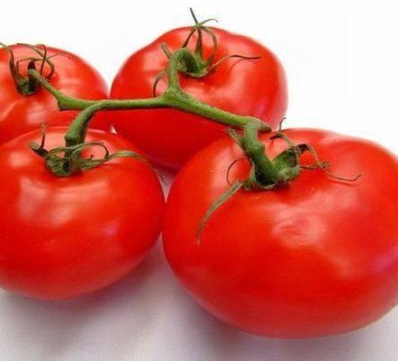 Описание и выращивание томата скороспелка для открытого грунта