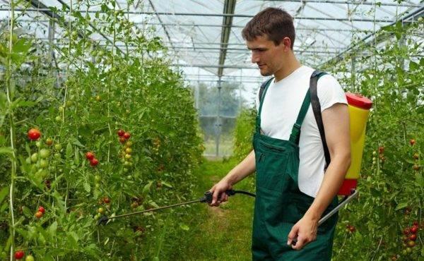 Янтарная кислота – универсальный биостимулятор и подкормка