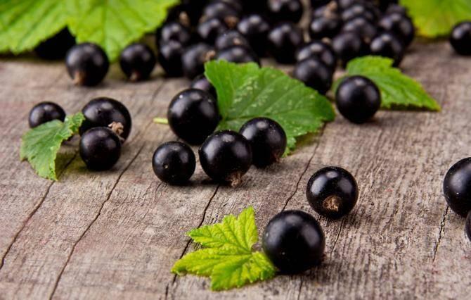 8 рецептов приготовления черной смородины, протертой с сахаром на зиму