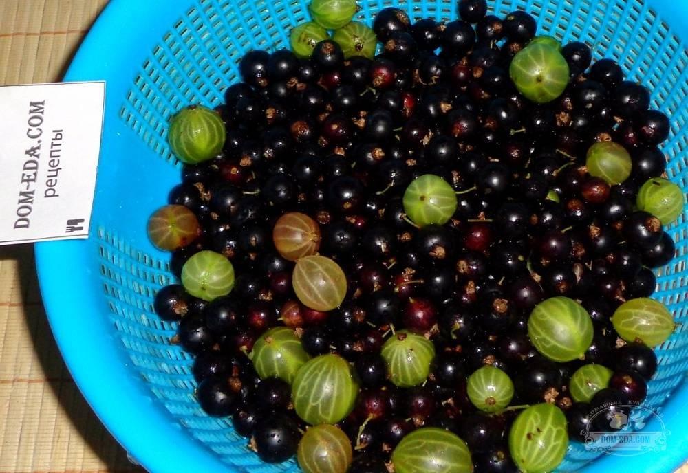 ТОП 3 рецепта приготовления на зиму варенья из черной смородины и крыжовника