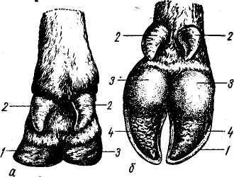 Верхние конечности человека. анатомия: кости, мышцы, суставы, скелет, строение, функции, отделы, заболевания