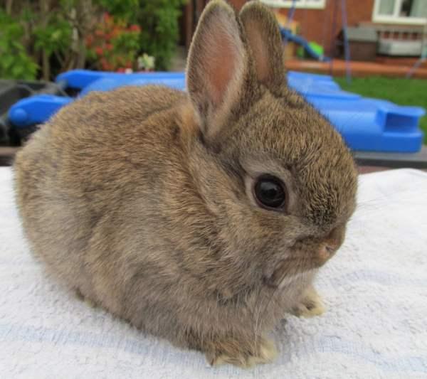 Как ухаживать за декоративным кроликом