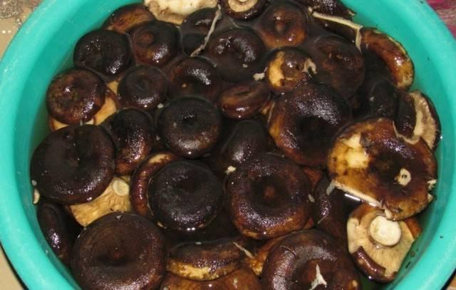 Рецепт как солить грибы горькушки в домашних условиях