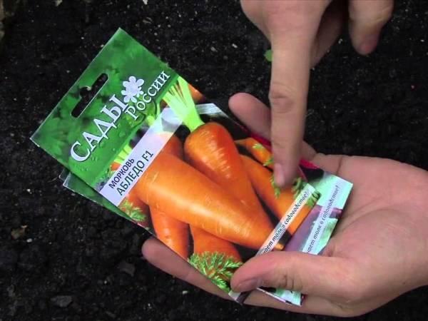 Когда правильно сажать морковь под зиму для хранения