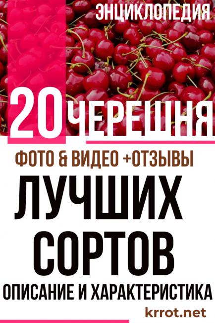 Описание сортов черной вишни Морель, Россошанская и Шоколадница, посадка и уход