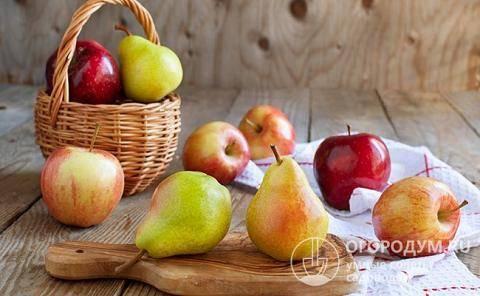Варенье из мягких груш на зиму простой