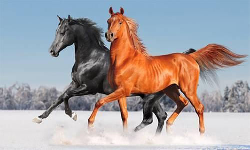 Насколько успешно разведение лошадей как бизнес