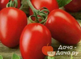 Описание сорта томата великий воин и его характеристики