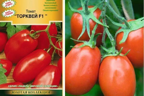 Характеристика и описание сорта томата Исполин, его урожайность