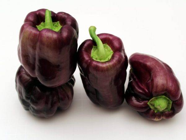 Перец винни пух характеристика и описание сорта