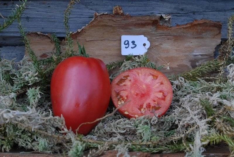 Сорт томата «абаканский розовый»: описание, характеристика, посев на рассаду, подкормка, урожайность, фото, видео и самые распространенные болезни томатов