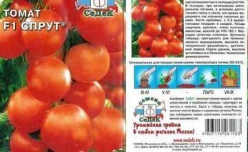 Лучшие сорта и гибриды томата