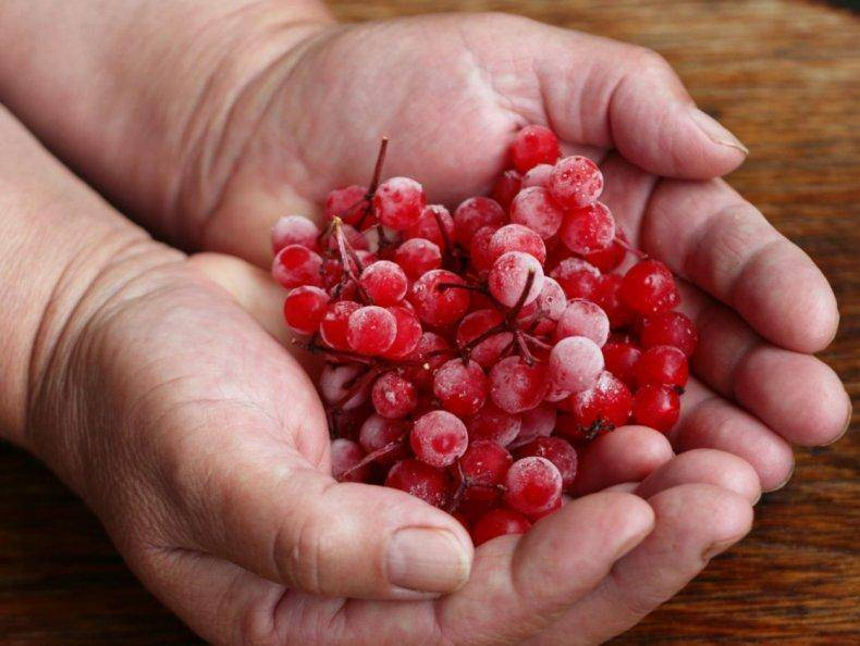 Ягода калина на зиму - 10 домашних вкусных рецептов