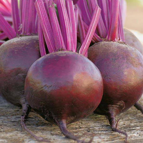 Высокая урожайность и морозостойкость – свекла боро f1. описание сорта и инструкция по выращиванию овоща