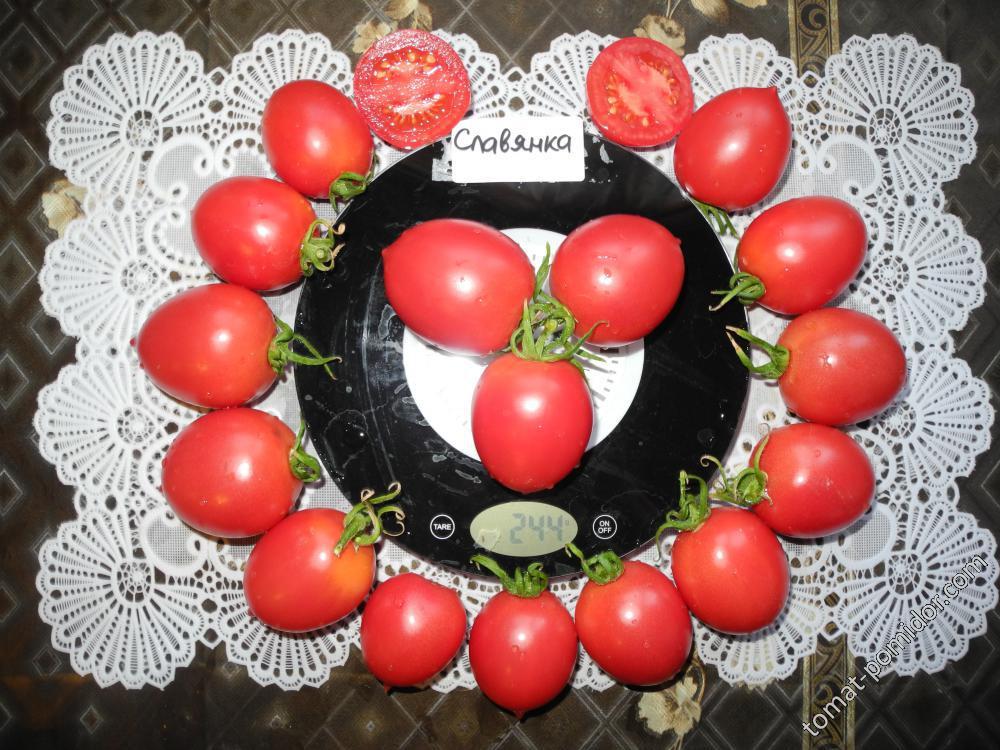 чикатило славянка томат отзывы и фото трудно определить сильнейшего