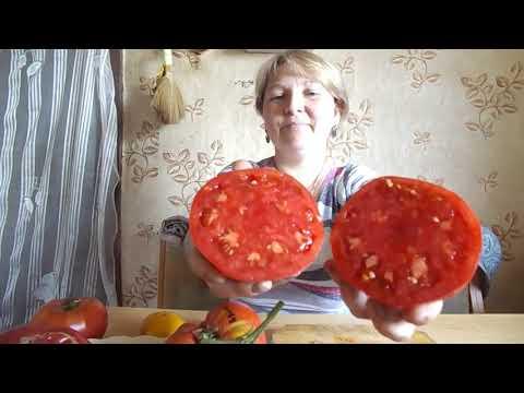 Желтоплодный томат янтарное сердце f1: подробное описание, методика выращивания, отзывы